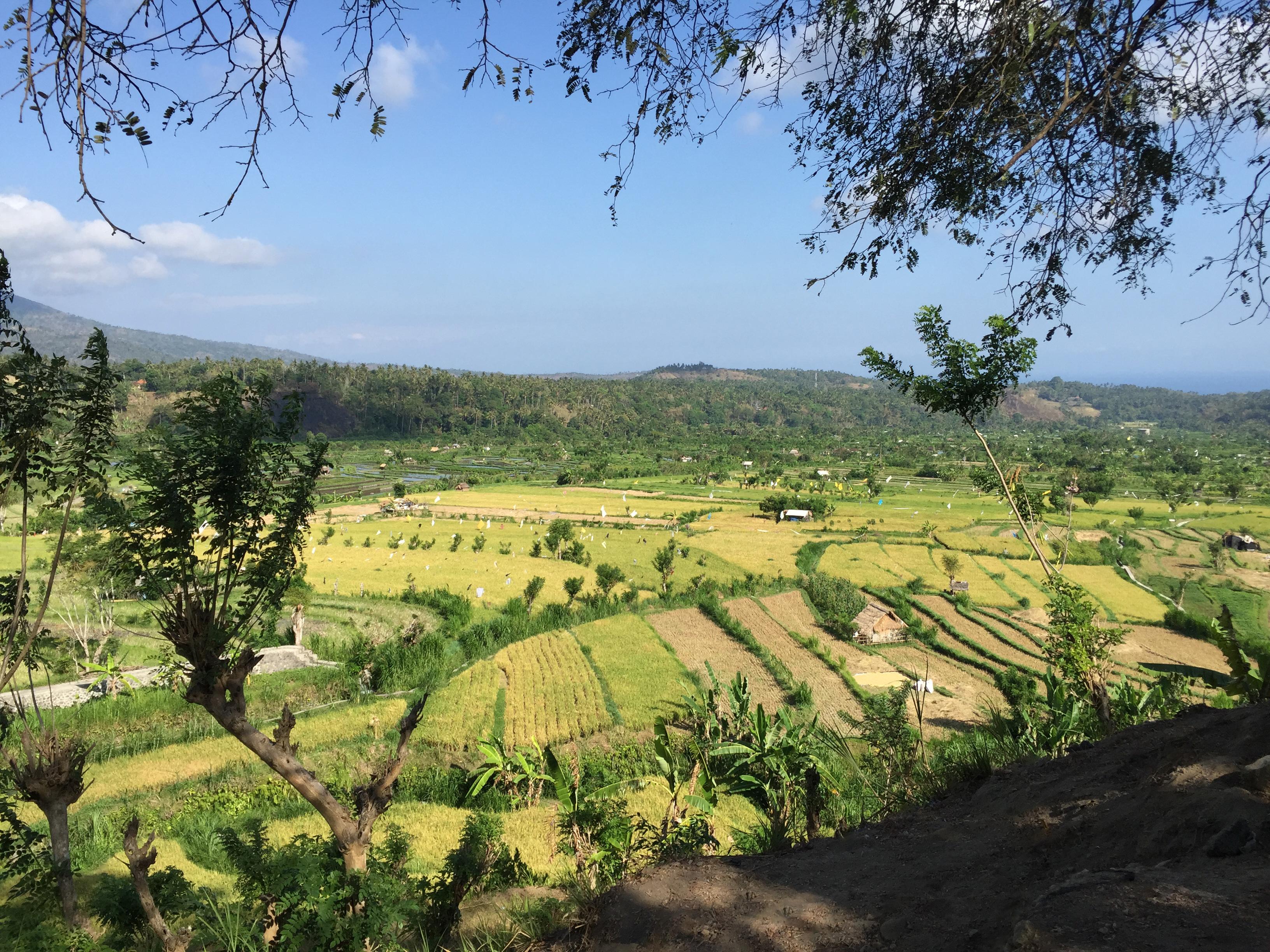 tourameo-reiseplanung-reiseziel-indonesien-bali-reisterrasse
