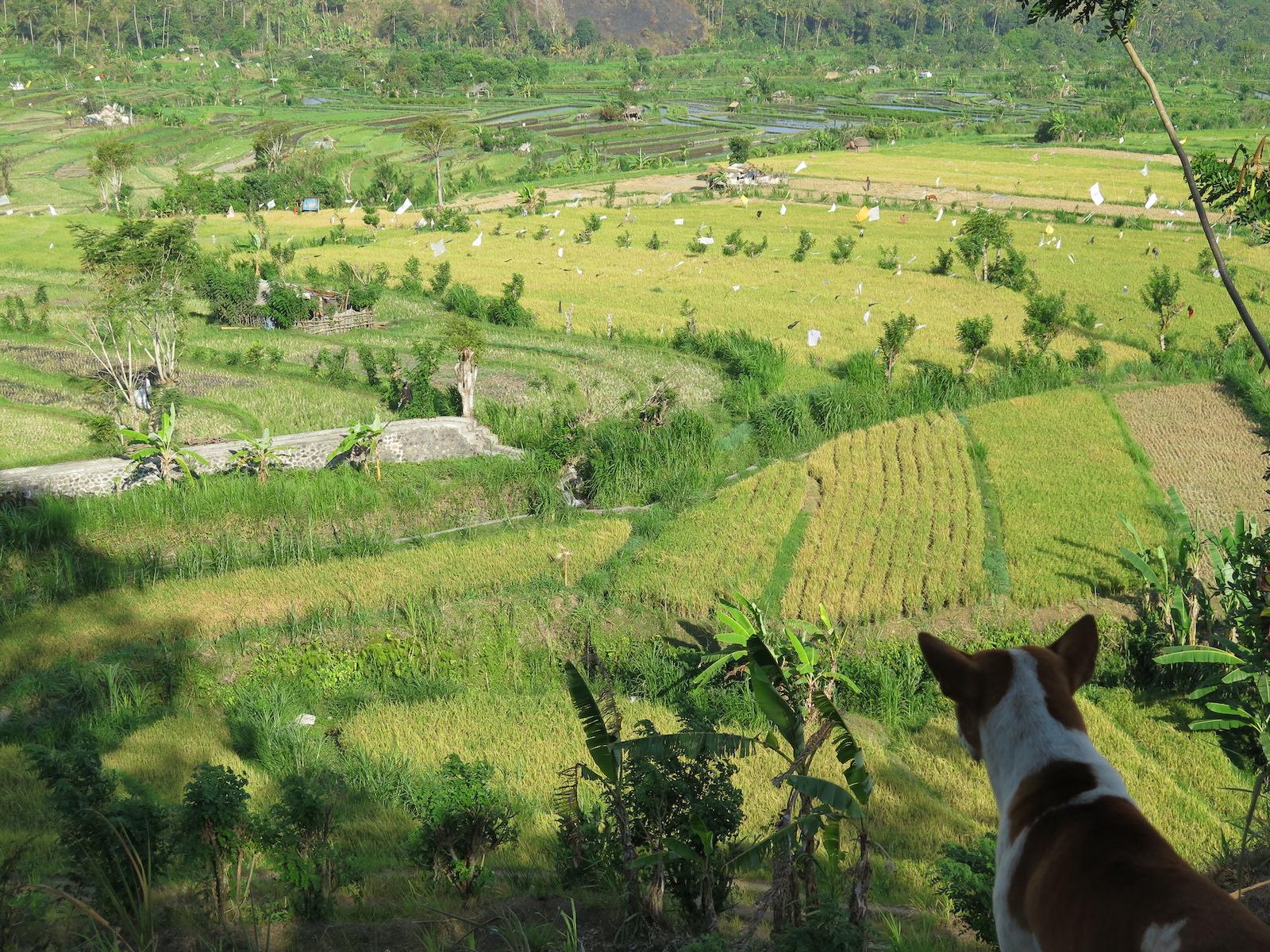 fernreisen-bali-indonesien-tourismus-chance-tourameo