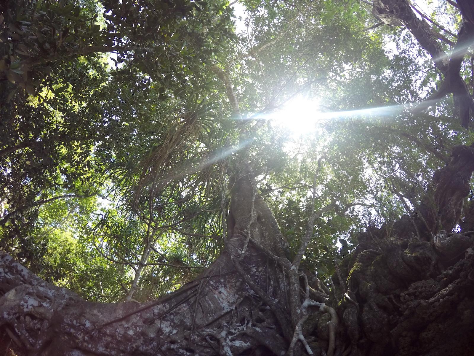 nachhaltigkeit-umweltbewusst-tipps-reisen-tourameo
